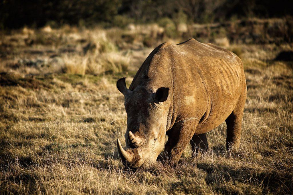 Big-Five-Animals-Rhino-1024x683