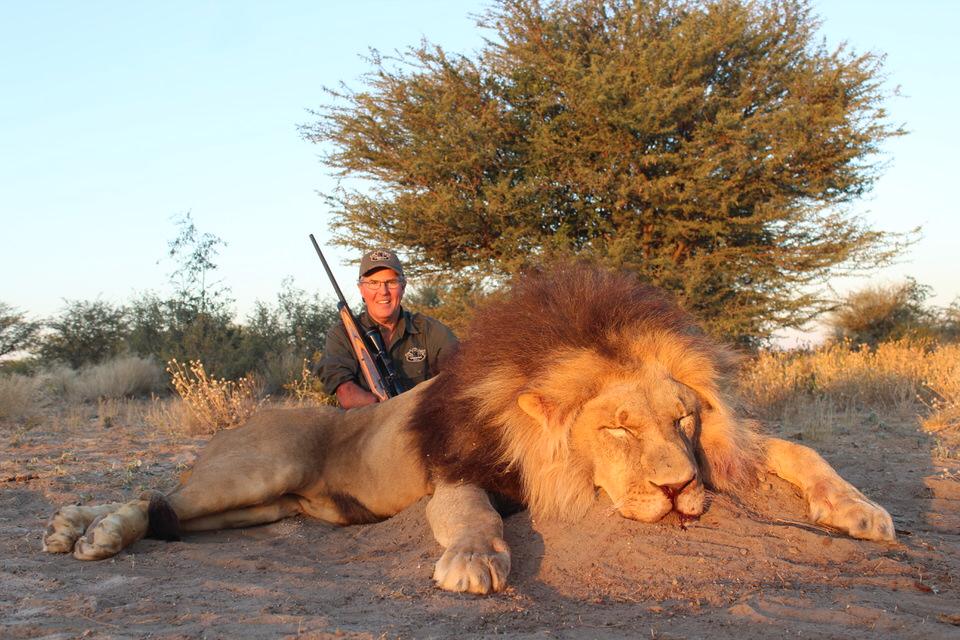 Cabassa Lion